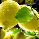 Limoncello – italský likér